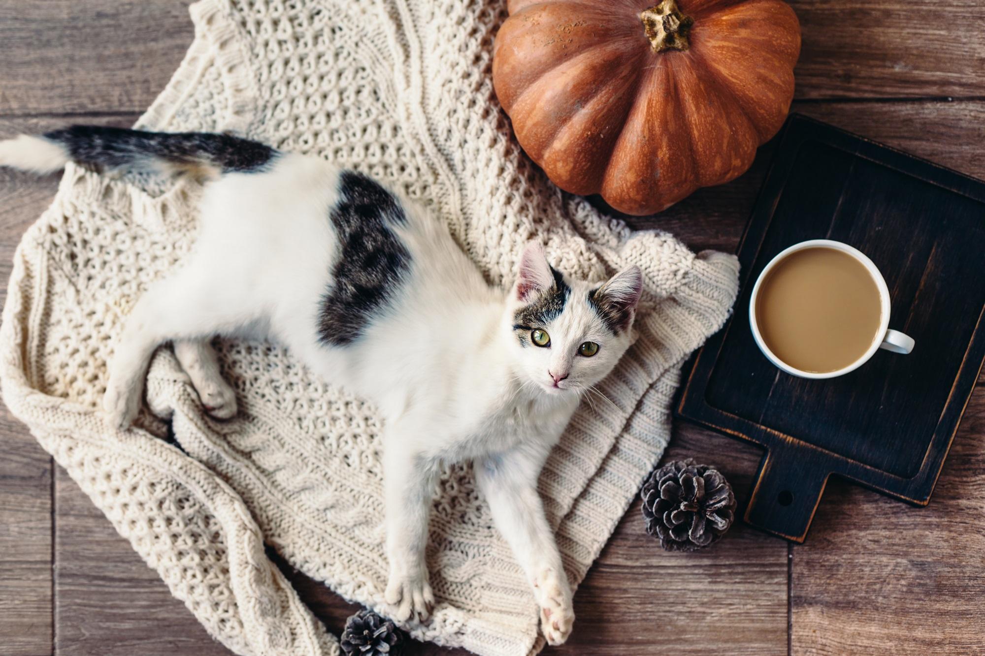 Как отдыхаем в ноябре 2018 года. Источник фото: Shutterstock
