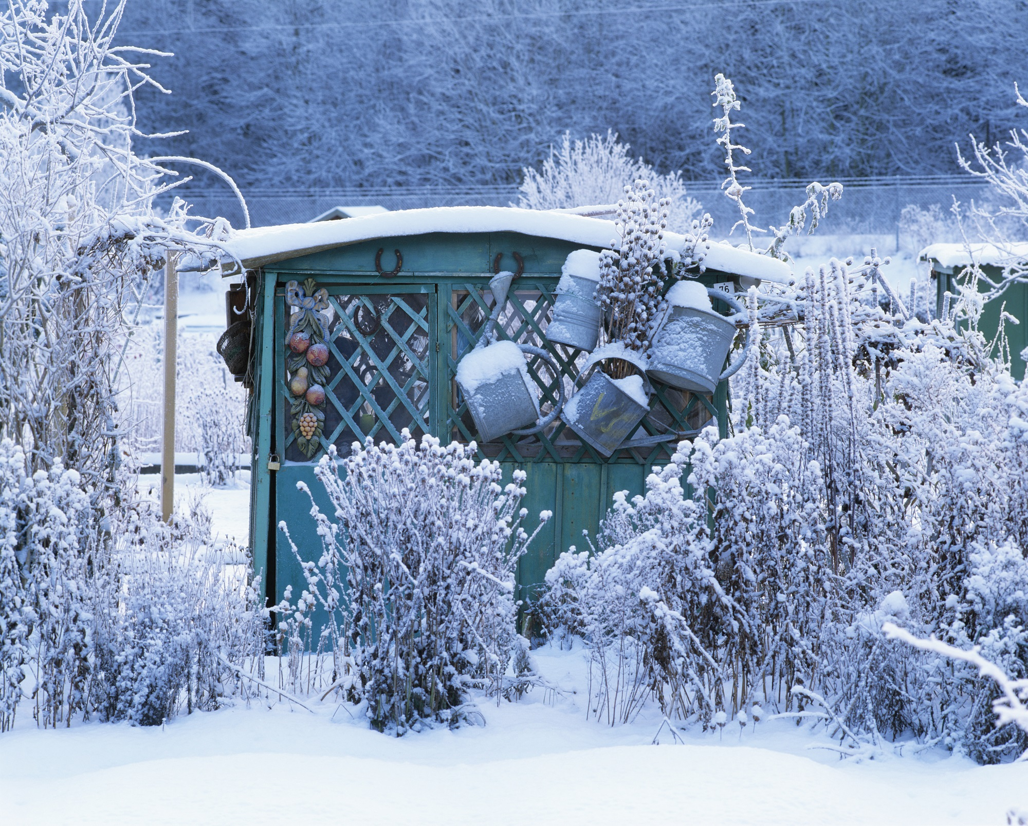Календарь садовода и огородника декабрь 2018. Источник фото: Shutterstock
