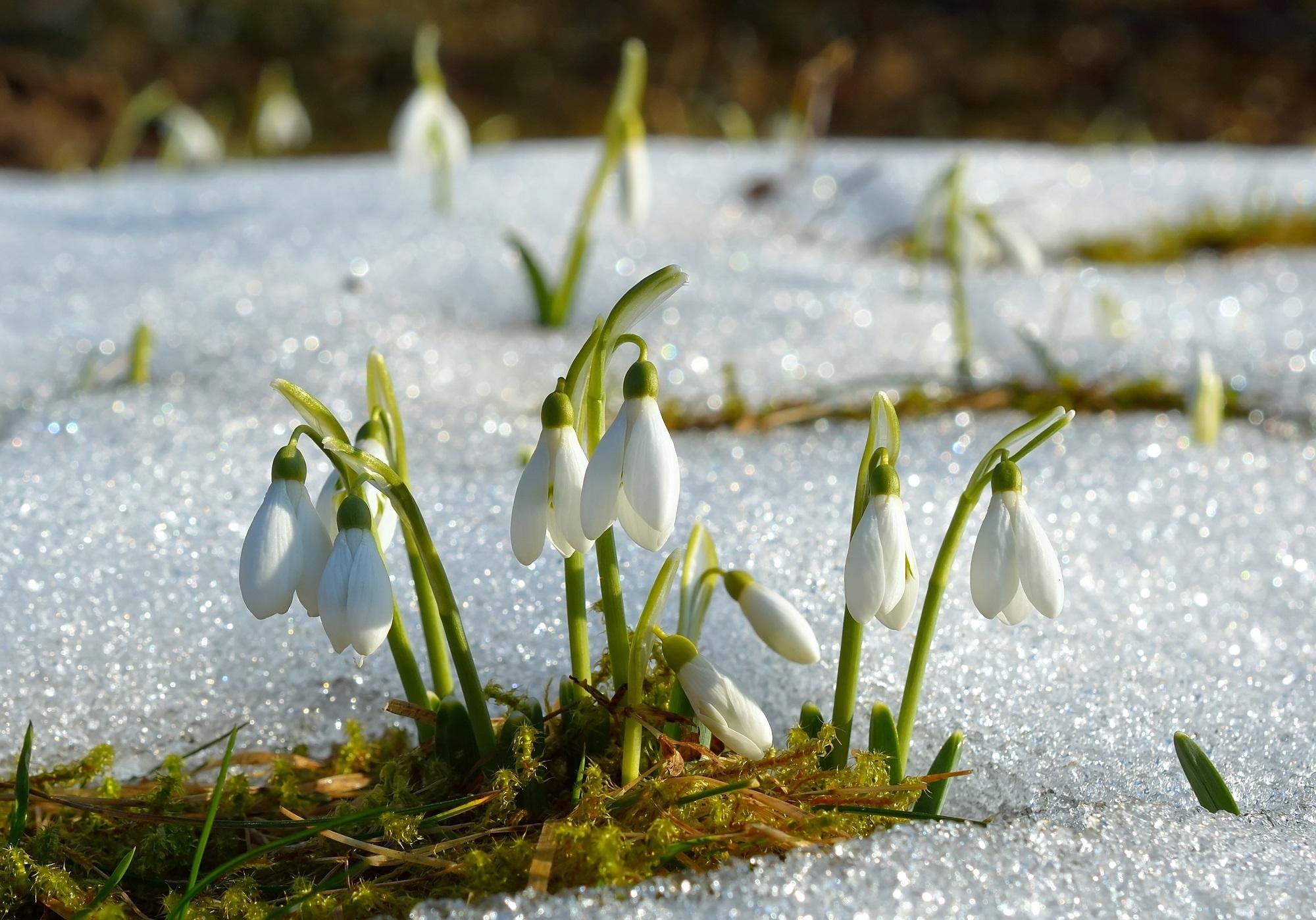 Календарь садовода и огородника март. Источник фото: Shutterstock
