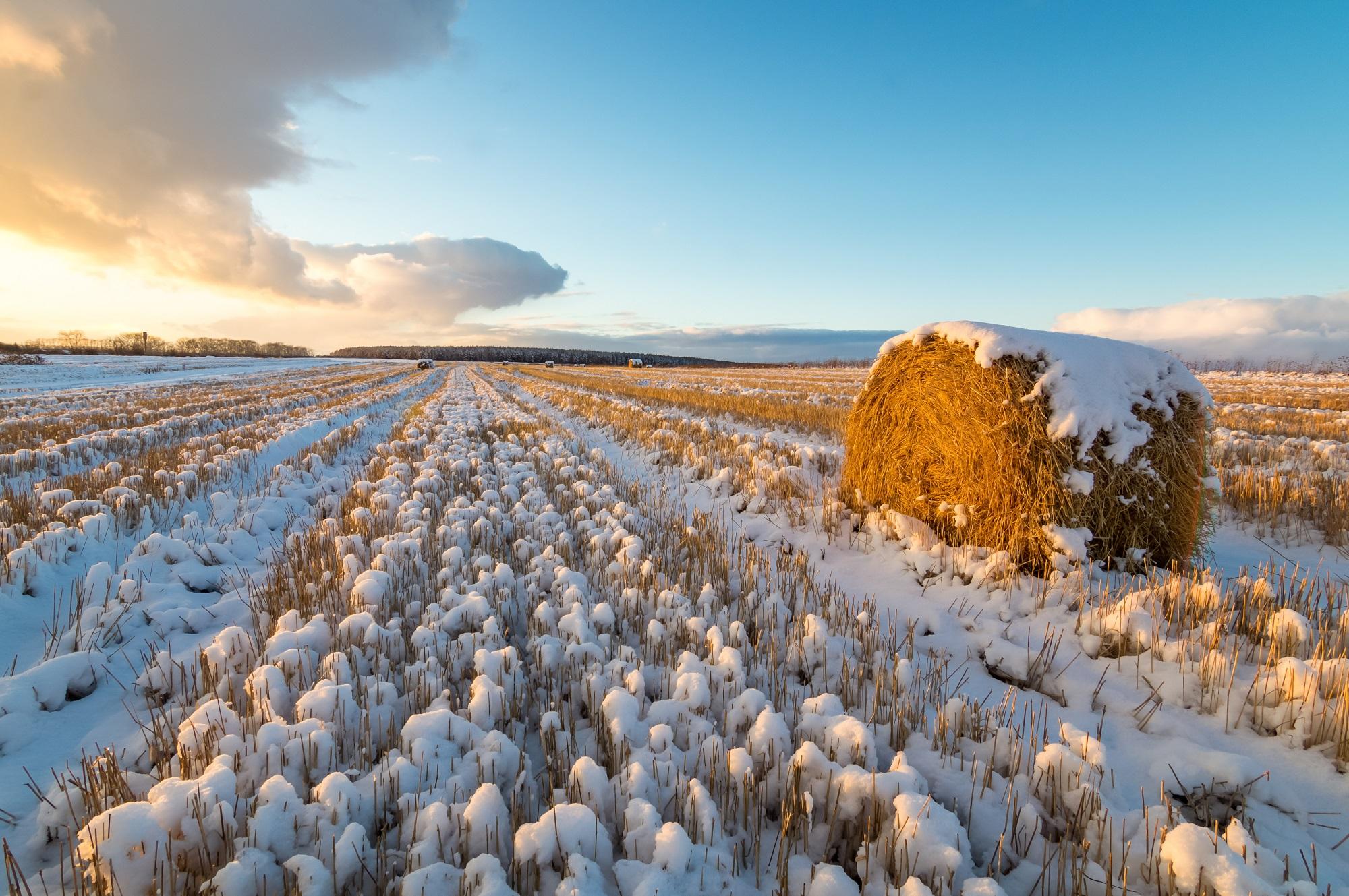 Календарь садовода и огородника ноябрь 2018. Источник фото: Shutterstock
