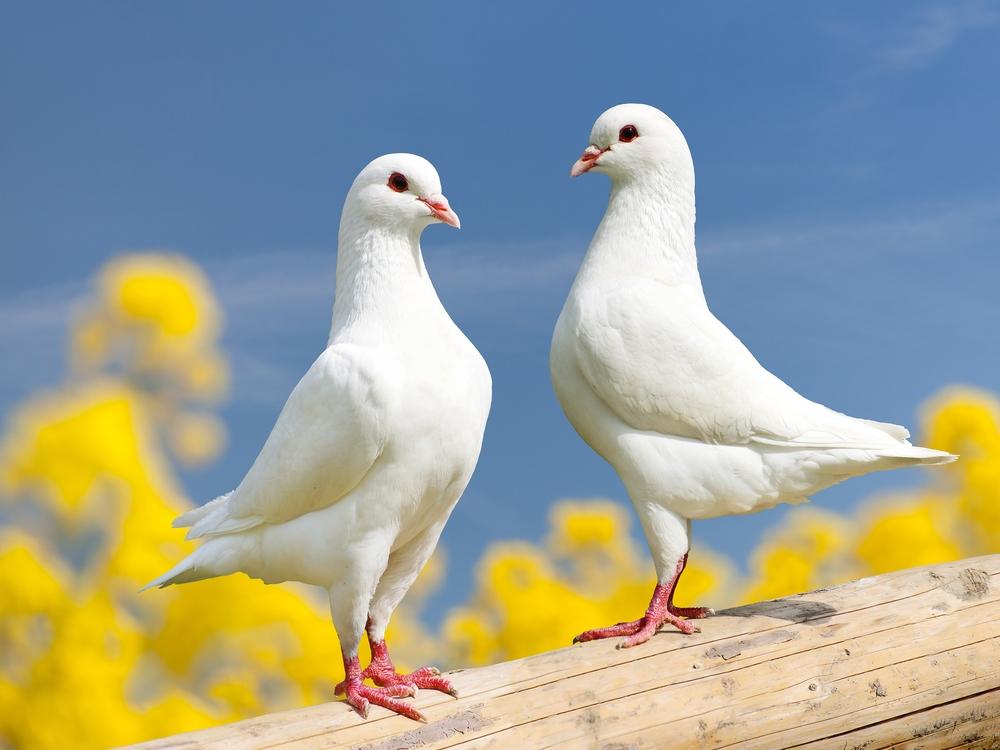 Сегодня Международный день птиц