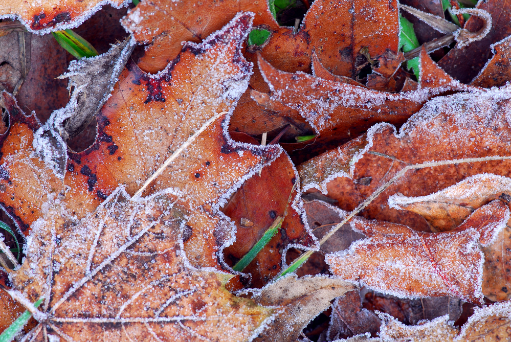 Утренние заморозки