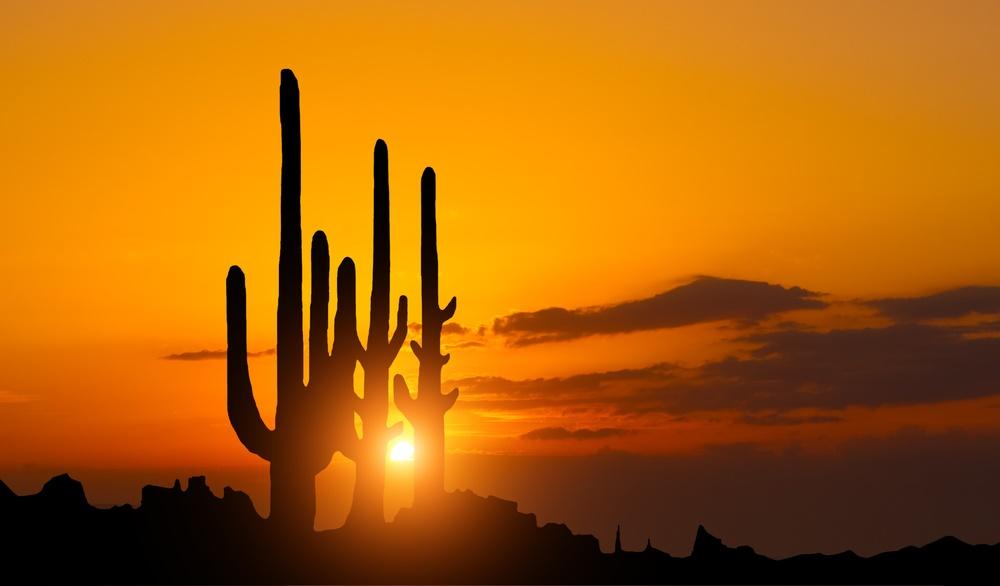Где-то в мексиканской пустыне