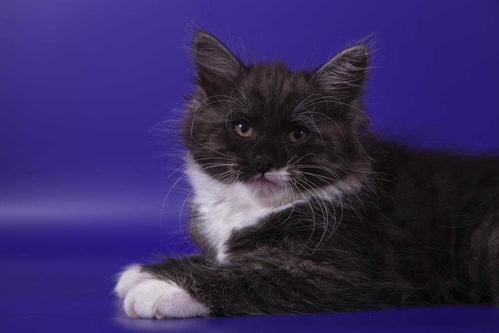 Его Величество Черный кот