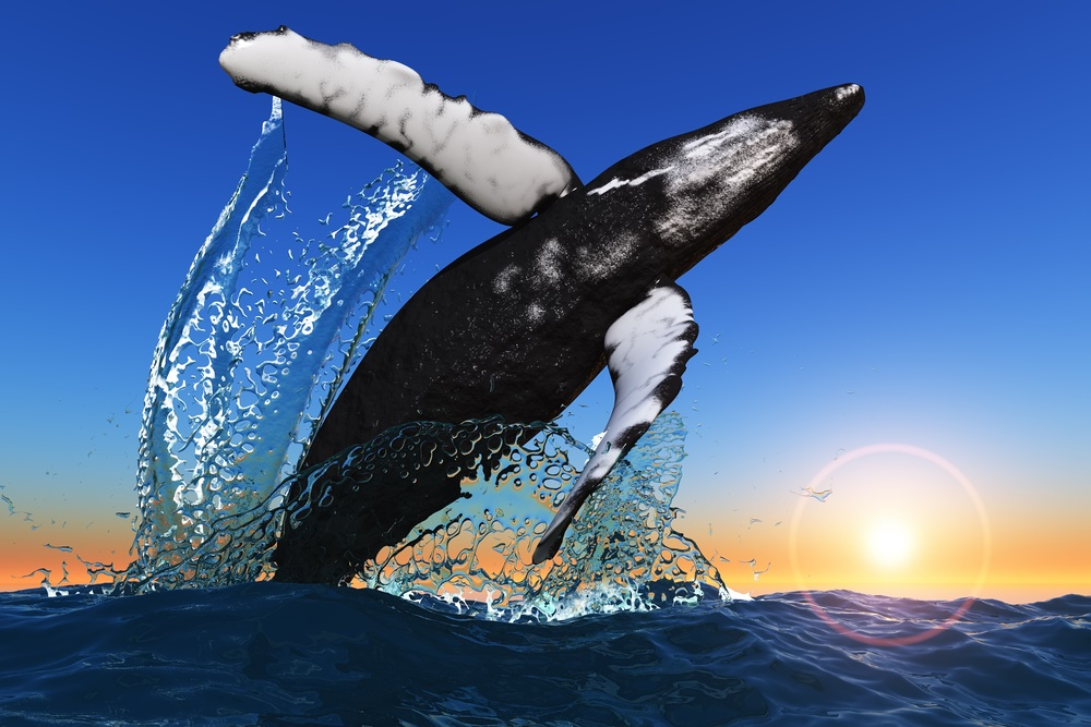 19 феврая - День кита