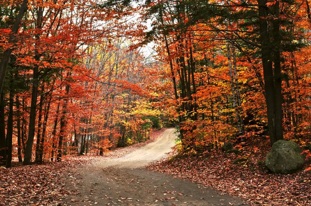 Чудесная осень!