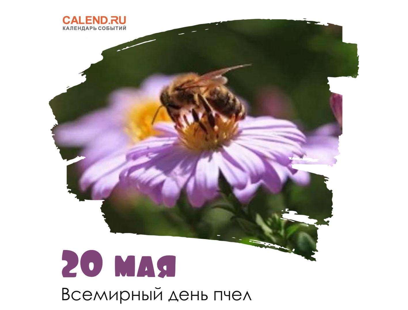 20 - Всемирный день пчел