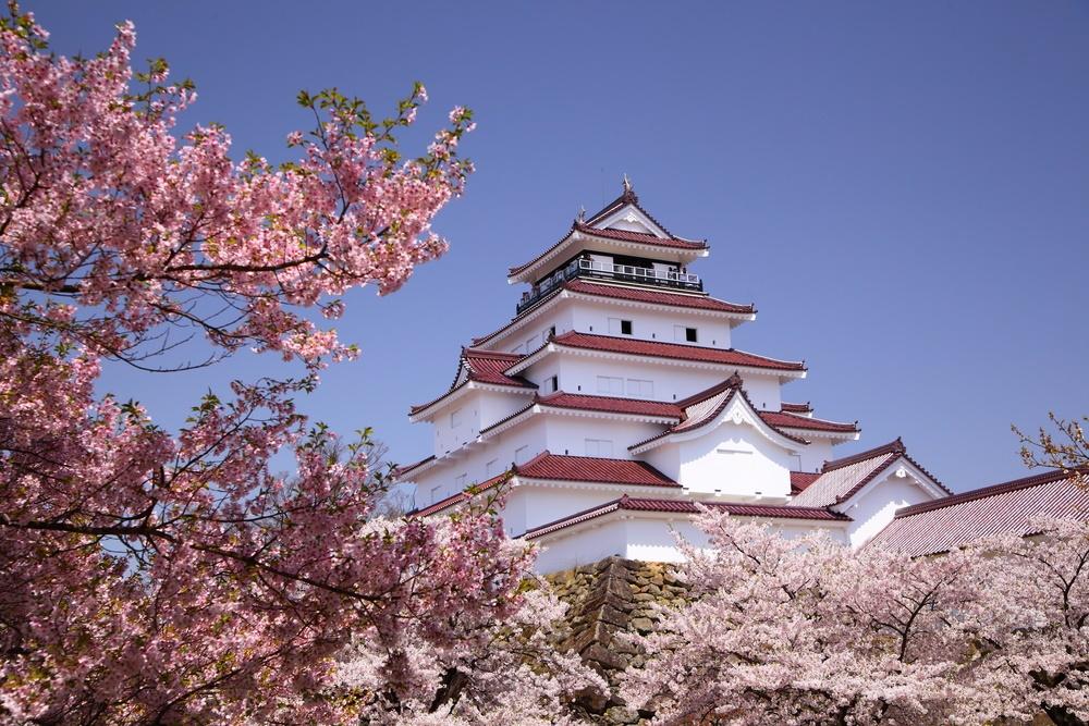 20 марта в Японии проходит фестиваль О-ханами