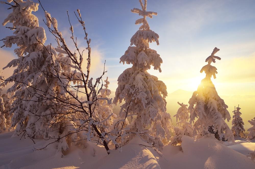 Зимний закат солнца в лесу