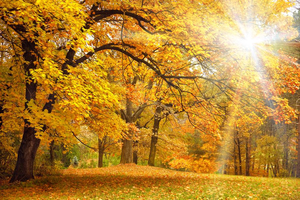Сегодня День осеннего солнцестояния