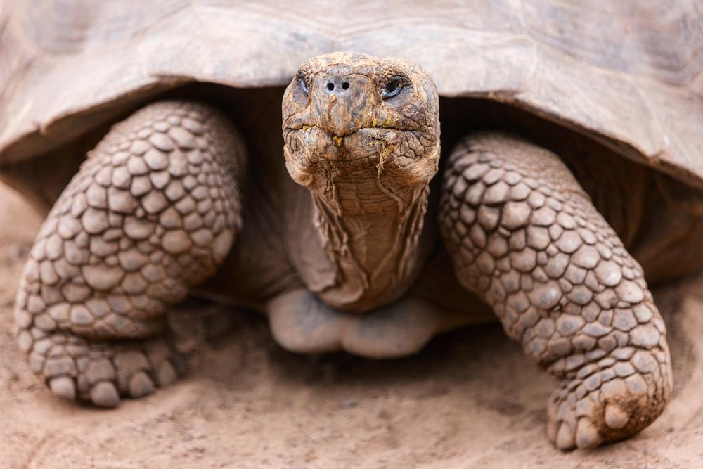 Сегодня Всемирный день черепахи