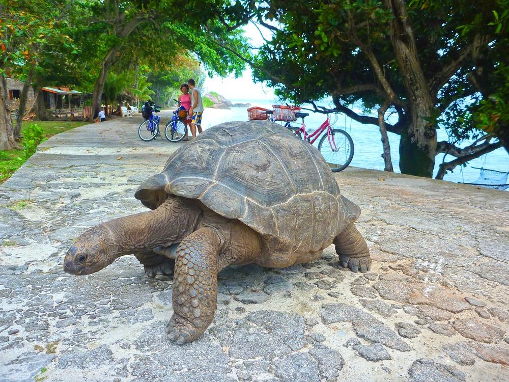 23 мая - Международный день черепахи