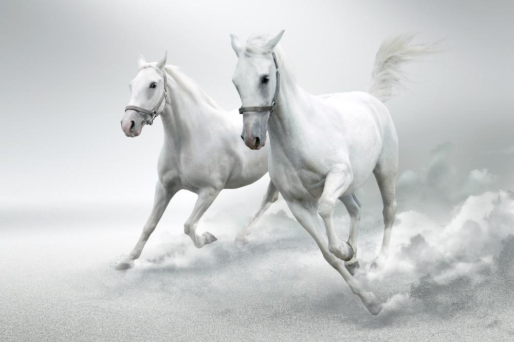 Как красивы белые кони!