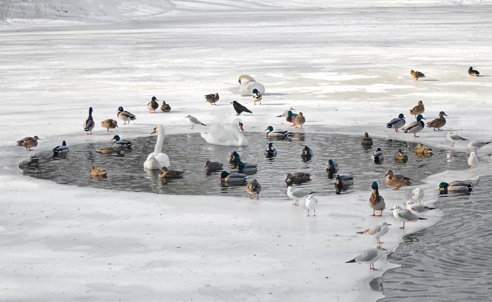 Птицы на замерзшем озере
