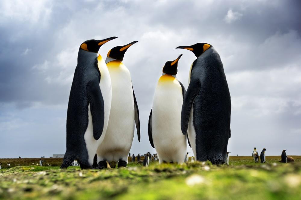25 апреля - Всемирный день пингвинов
