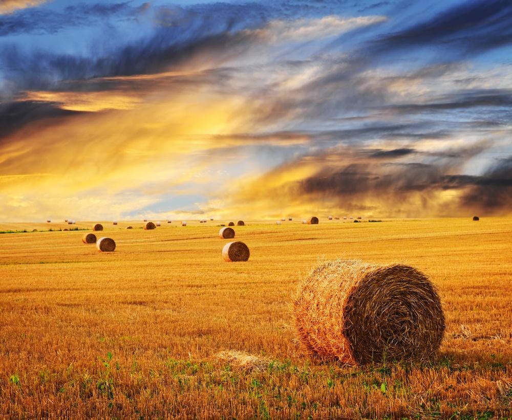 Закат солнца в поле