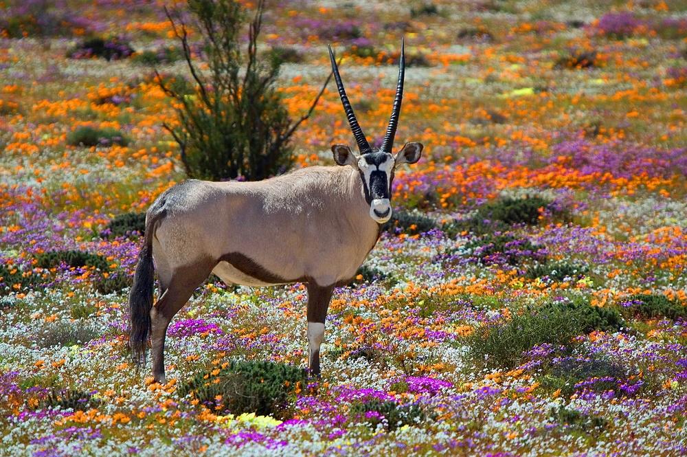 Привет из Южной Африки!