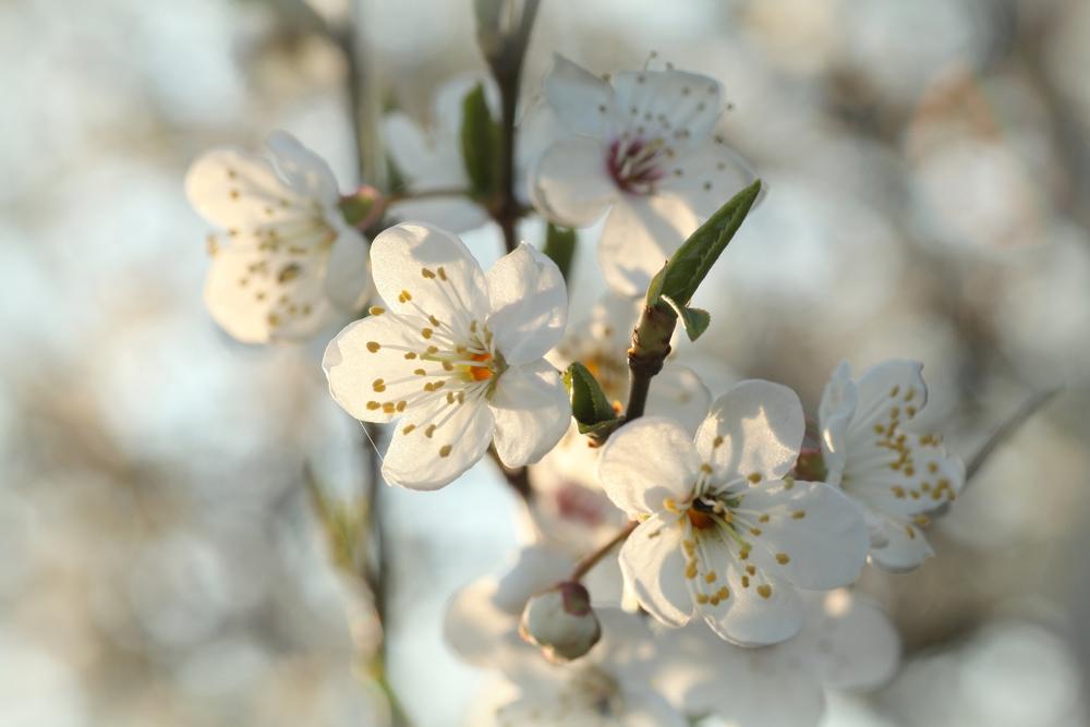 Чудо весны