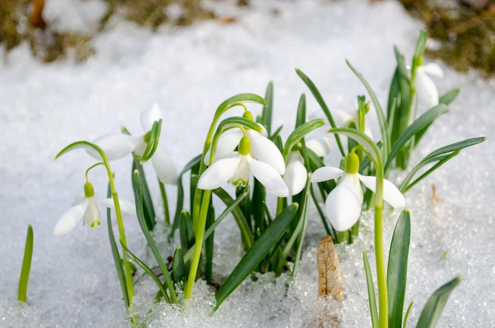 Весна идет