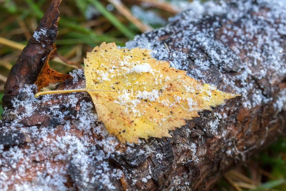 Зима вступает в свои права