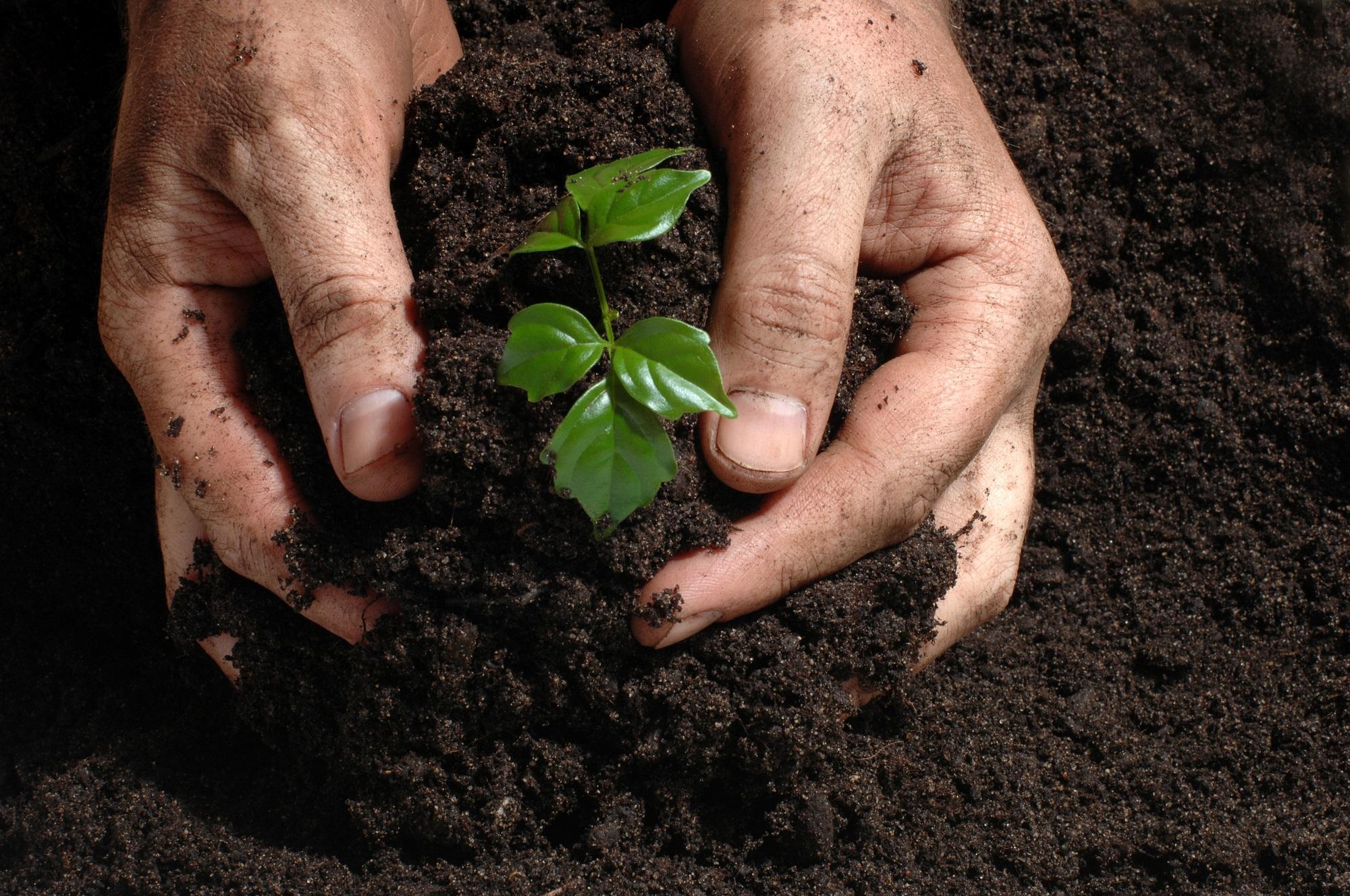 Когда сажать рассаду?