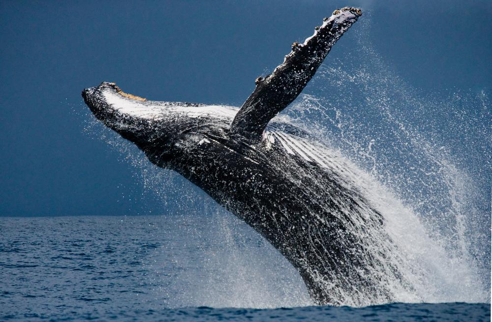 23 июля - Международный день китов