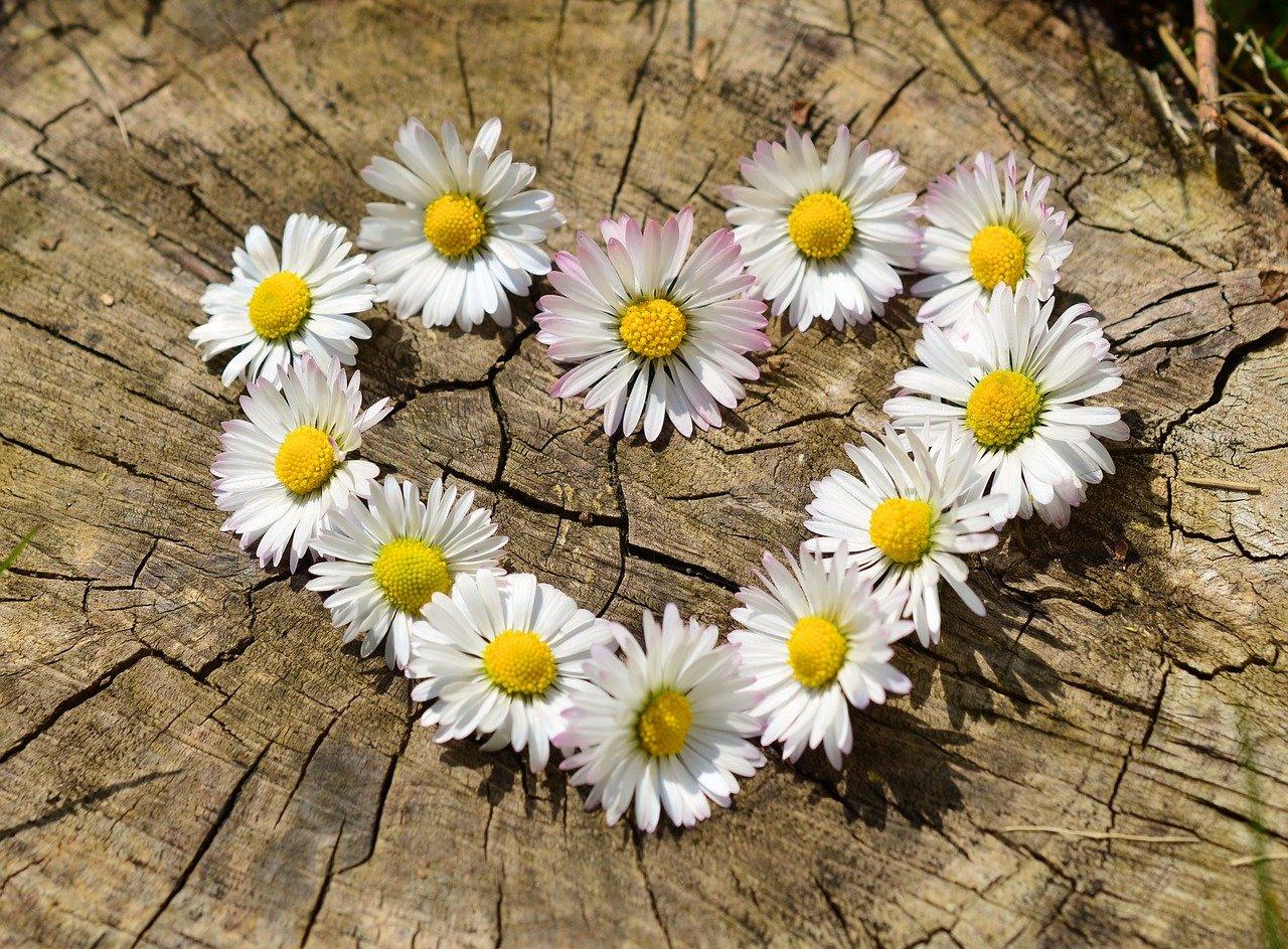 29 сентября, среда: Всемирный день сердца, День отоларинголога, 85 лет Алле Демидовой и многое другое
