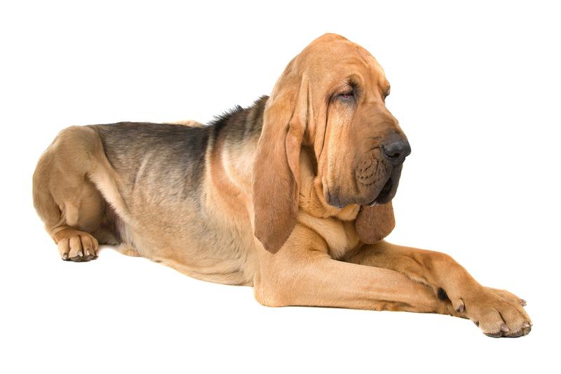 2018 год - год желтой собаки