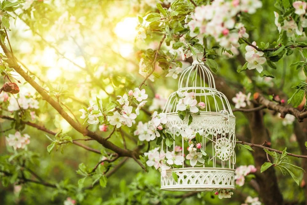 На Севере России яблони цветут в начале июня