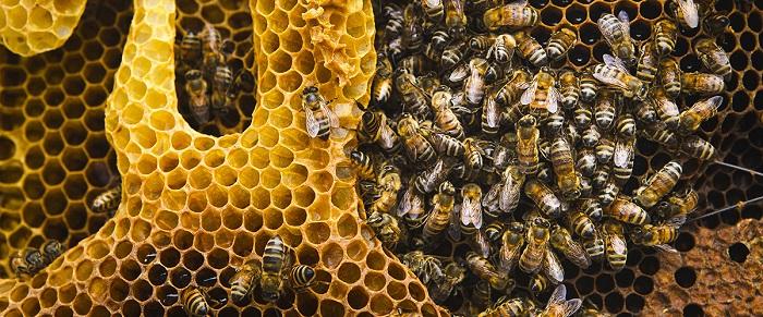 20 мая - Всемирный день пчел