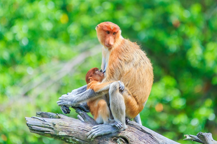 14 декабря - Международный день обезьян
