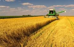 День работника сельского хозяйства и перерабатывающей промышленности в России