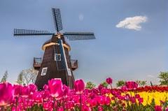 Национальный день мельника в Нидерландах