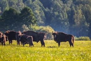 День охраны окружающей среды Беларуси