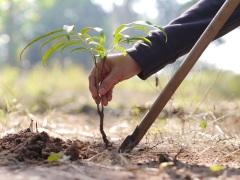 День посадки деревьев в Южной Корее