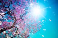 День весеннего равноденствия в Японии