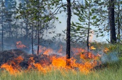 День защиты леса от пожара в США