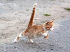 Фестиваль котов