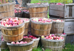День яблока