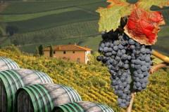 Фестиваль винограда в Марино