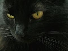 День защиты черных котов в Италии