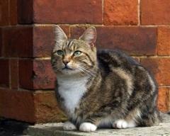 Всемирный день петербургских котов и кошек