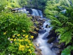 Единые дни действий в защиту малых рек и водоемов