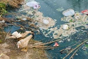Международный день очистки водоемов в России