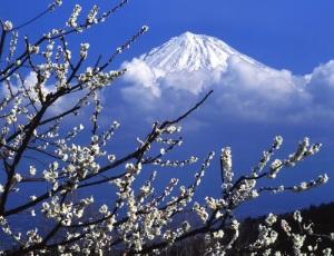 Фестиваль цветов (Хана Мацури) в Японии