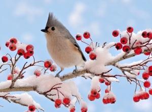 День орнитолога в России