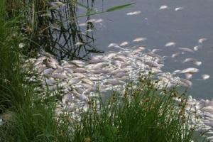 Международный день борьбы с незаконным, несообщаемым и нерегулируемым рыбным промыслом
