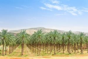 День дерева в Иордании