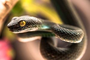 Международный день змеи