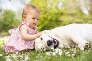 День благодарности собаке